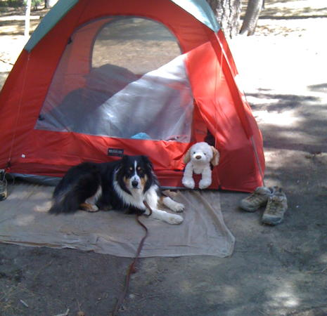 Yosemite and Bjorn at the tent